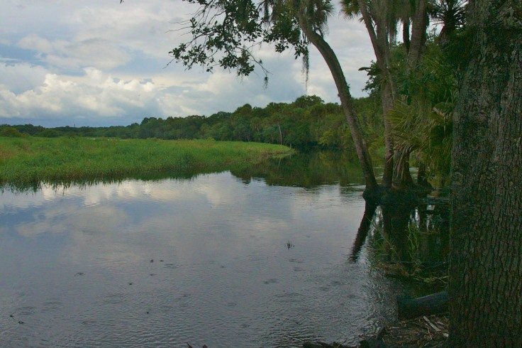 Myakka River State Park - The water is rising!