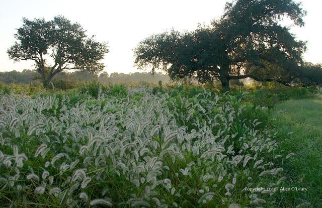 Grasses-2012 - 3