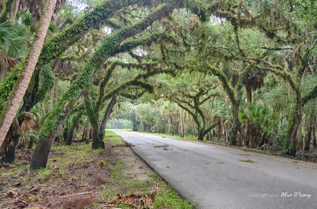 Main Drive in Myakka River State Park