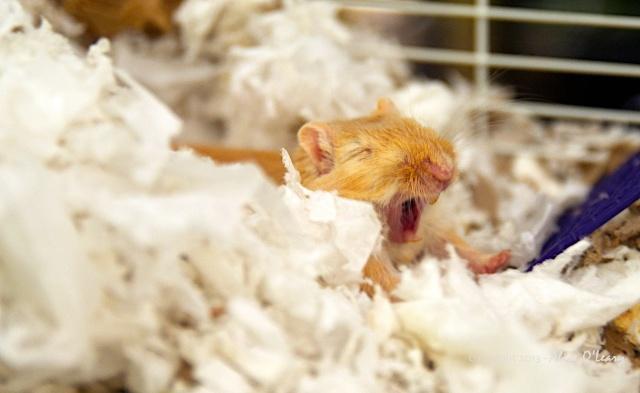 A yawn or a roar?