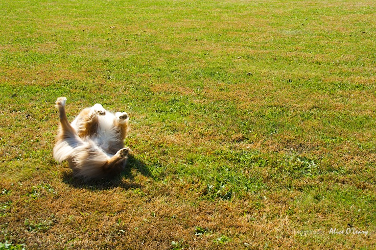 Tango's happy dance on an Indian Summer day.