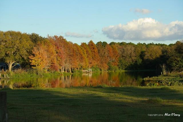 Florida's autumn