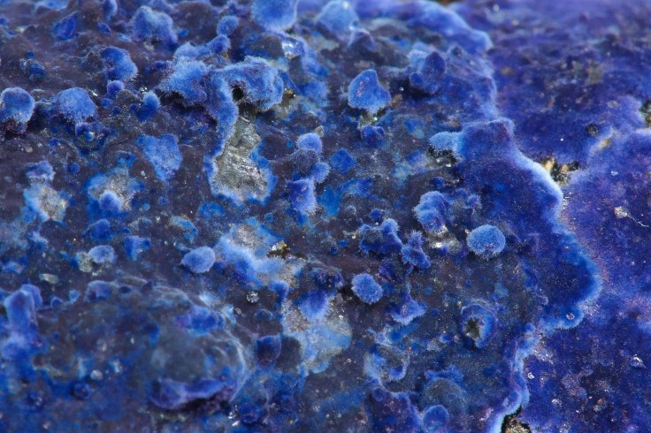Blue Velvet Fungi - Closeup
